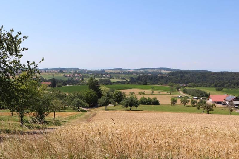 Aussicht über die große Fläche der Gemeinde Freiamt im Sommer