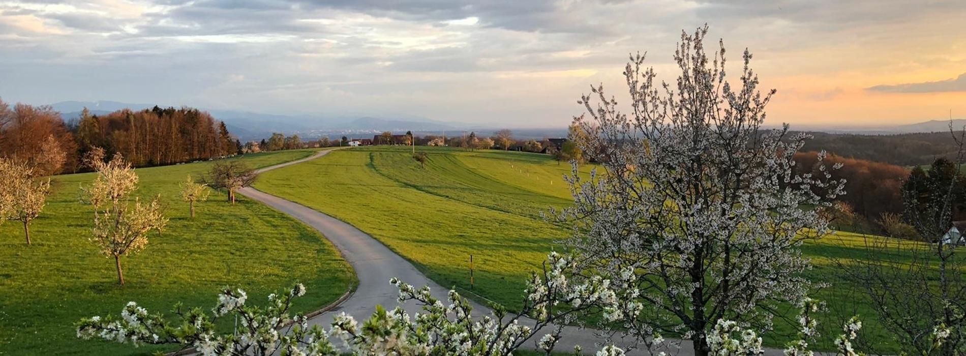 Ausblick über grüne Wiesen im Frühling
